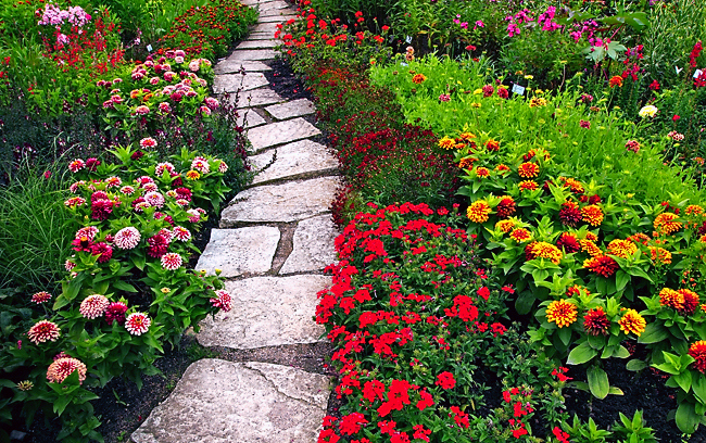 flowers for garden